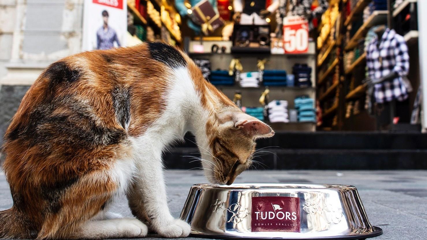 Tudors'dan sokak hayvanları için anlamlı davranış