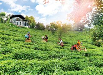 Her Dem Toprak İçin projesiyle sürdürülebilir çay tarımı