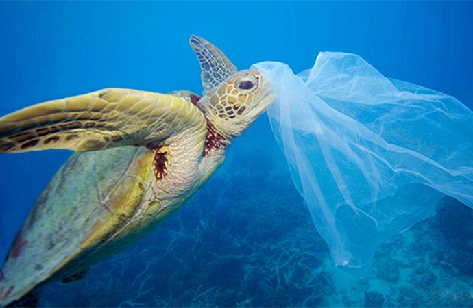 WWF Türkiye'den #PlastikKirliliğeHayır çağrısı