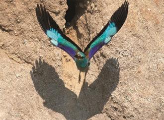 Türkiye'nin ilk kuş atlası yayınlandı