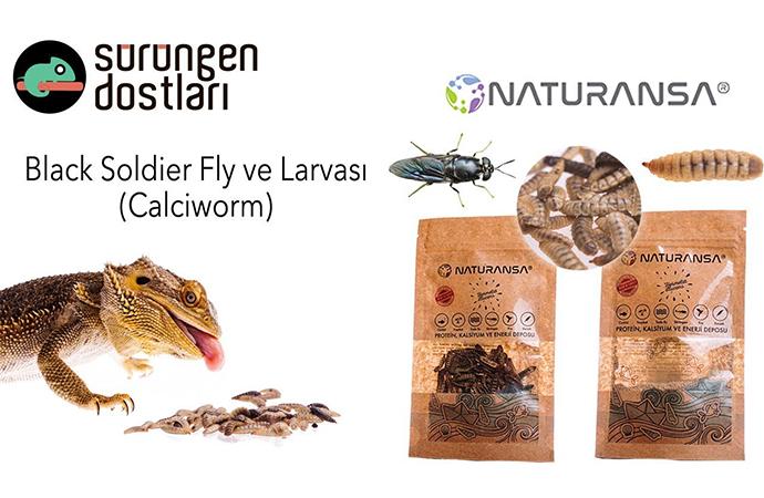 Yenilebilir böceklerden protein üreten girişim: Naturansa