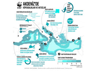 Akdeniz'in köpekbalıkları tehlikede