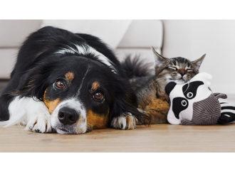 Hayvan bakımını pratik hale getiren sosyal girişimler