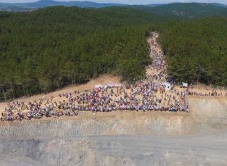 """""""Ağaç tanımı mevzuatta açık, en az 195 bin ağaç kesildi"""""""