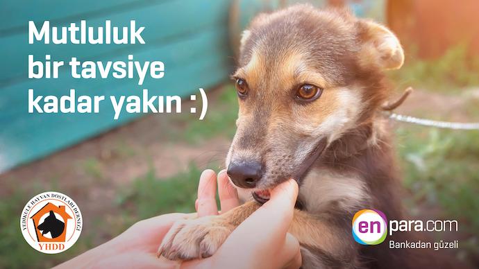 Enpara.com'dan barınak hayvanları için yeni proje