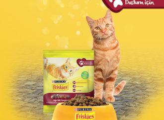 Purina Friskies ve Yemeksepeti sokak kedileri için iş birliği
