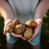 PepsiCo'dan pozitif tarım ile çiftçilere sürdürülebilir tarım desteği