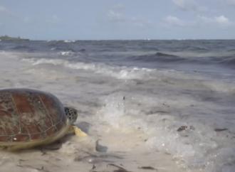 Watamu'daki deniz kaplumbağaları mücadelesi